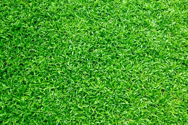 A close up photo of green synthetic turf.
