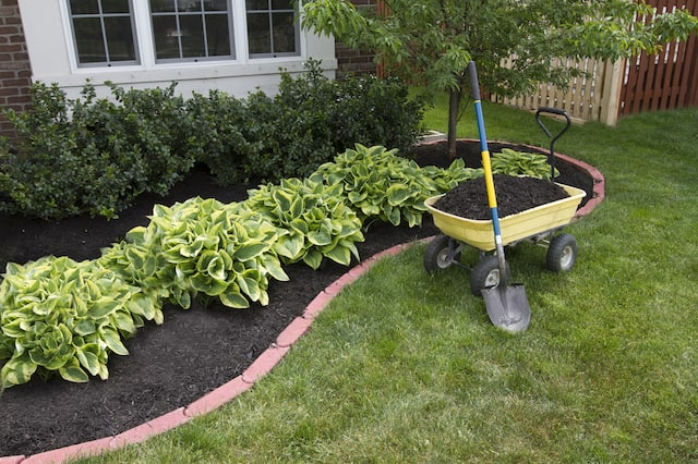 A wheelbarrow with black mulch and a shovel sits in front of a freshly mulched flower bed with several green bushes on a grassy lawn.