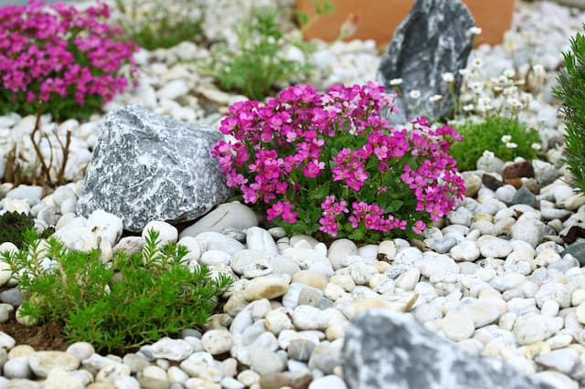 A garden with pink flowers and green bushes landscaped with stones and rocks.